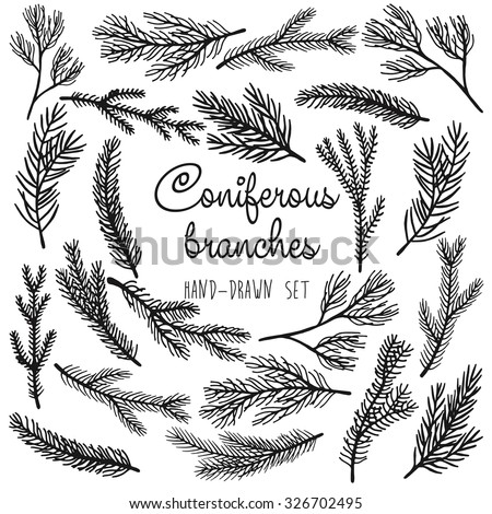 Vector pine tree branches set black silhouettes isolated on white background - stock vector