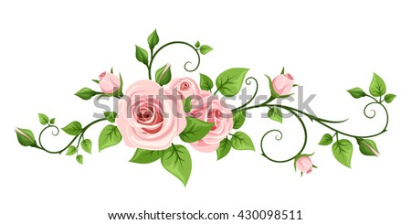 Vector pink rose vine isolated on a white background.