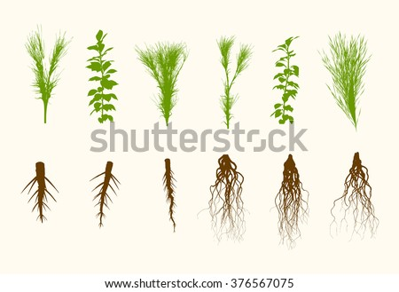 Vector Plants and Roots Set Illustration - stock vector