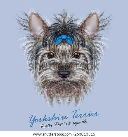 Vector Portrait of a Domestic Dog. Cute head of Yorkshire Terrier on blue background. - stock vector