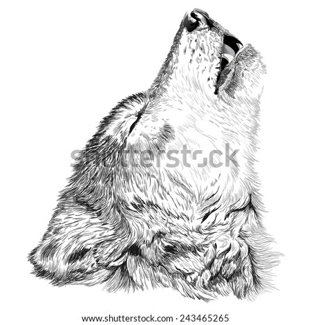Vector portrait of angry wolf face - stock vector