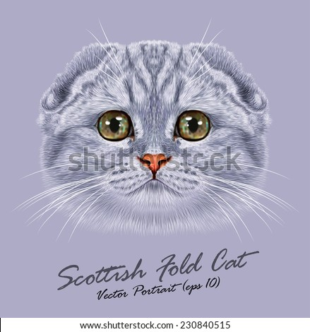 Vector Portrait of Scottish Fold Cat. Cute young grey cat with green eyes. - stock vector