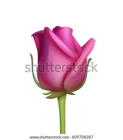 Vector Purple Rose Isolated On White Background