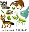 vector raccoon, napu, mola-mola, duck, mantis and jackal - stock vector