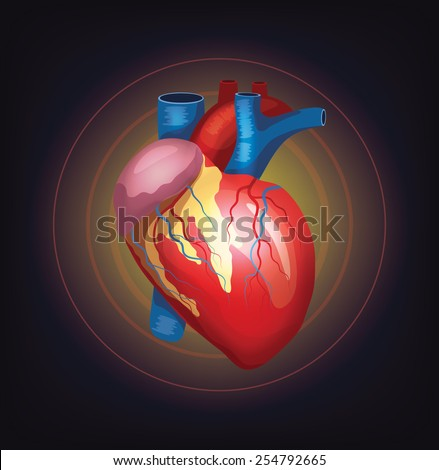 Vector realistic heart illustration - stock vector