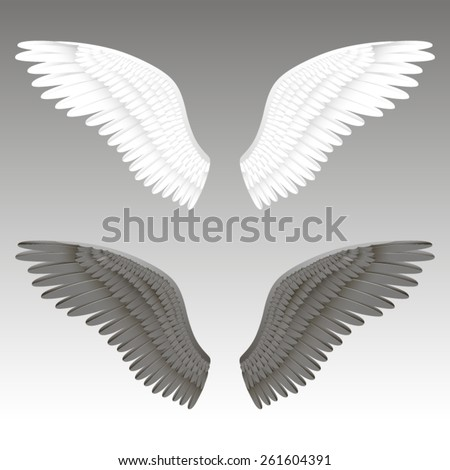 Vector realistic illustration of a black and white angel wings