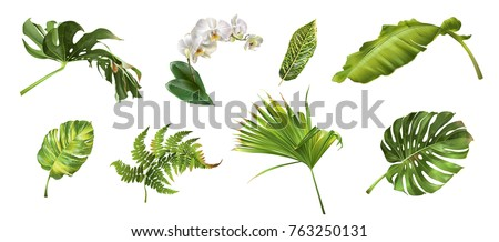 Vector realistic illustration set of tropical leaves and flowers isolated on white background. Highly detailed colorful plant collection. Botanical elements for cosmetics, spa, beauty care products