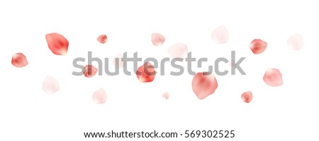 Vector realistic petals flying in the air on white background. Cherry blossom floating, spring concept.