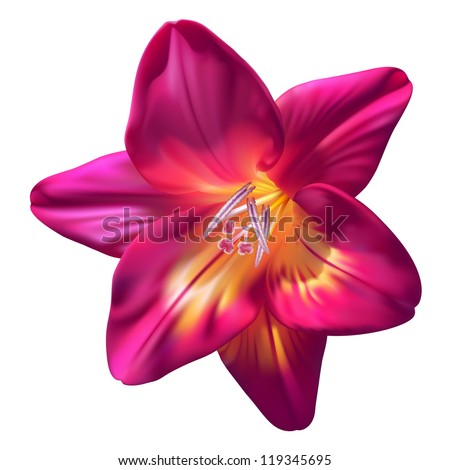 Vector realistic purple freesia flower isolated on white background - stock vector