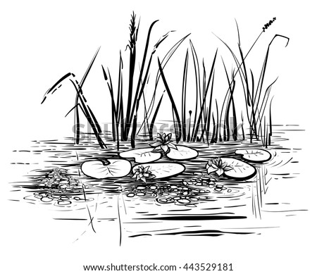 Vector reeds and water...