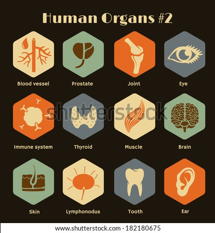 Vector retro icons of human organs and systems Flat design - stock vector