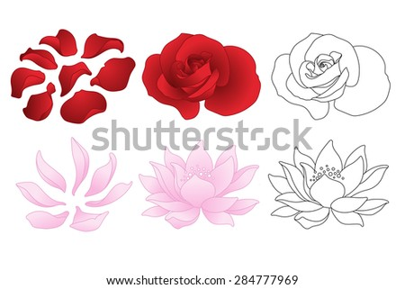 Vector rose and lotus. Flowers and petals - stock vector