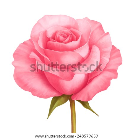 Vector rose pink flower decorative illustration isolated on white background - stock vector