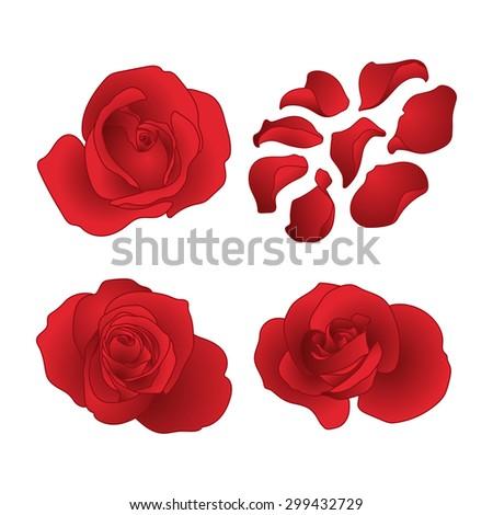 Vector roses and petals set - stock vector