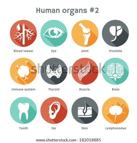 Vector round icons of human organs Flat design - stock vector