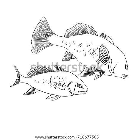 Fish Doodle Stock Images Royalty Free Images Amp Vectors