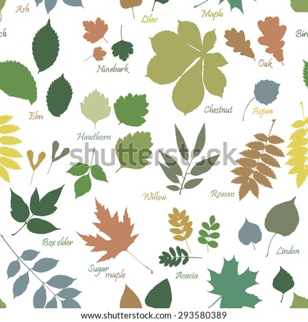 Vector seamless pattern of multicolor leaves silhouettes with names on white background. Linden, ash, oak, maple, box elder, hawthorn, chestnut, birch, elm, willow, aspen, acacia, rowan, lilac, rowan - stock vector