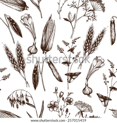 Vector seamless pattern with ink hand drawn agriculture plants sketch.  Vintage oats illustration - stock vector