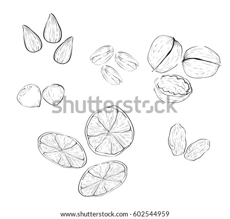 Vector set  different nutrition sketches, nuts and dried fruits