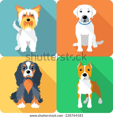 Vector Set icon flat design dogs different breed: Cavalier King Charles Spaniel and Yorkshire terrier, Labrador Retriever and American Staffordshire Terrier - stock vector