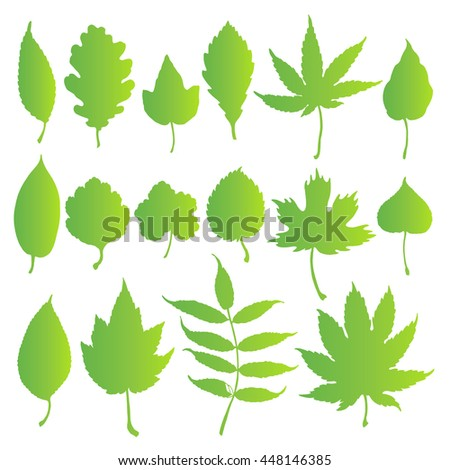Vector set leaves. Natural green leafs set. Leafs element floral color garden art. Collection green tree leaves illustration. - stock vector