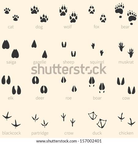 Vector set of 20 animal footprints icon - stock vector