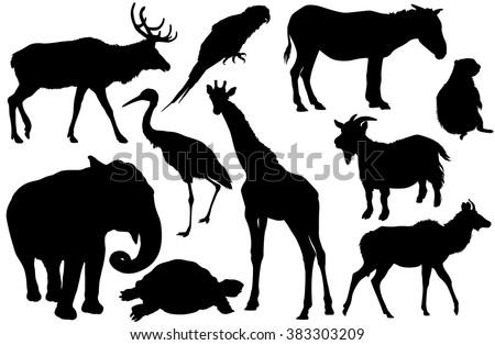 vector set of animal silhouettes (Elk, deer, Parrot, cockatoo, horse, pony, zebra, ground squirrel, elephant, Heron, giraffe, goat, turtle, Antelope) - stock vector
