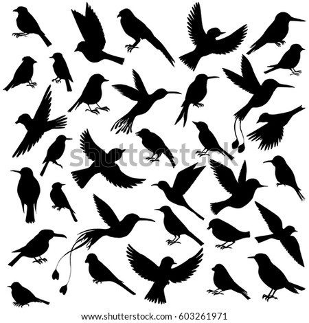 Songbird Stock Vectors, Images & Vector Art | Shutterstock