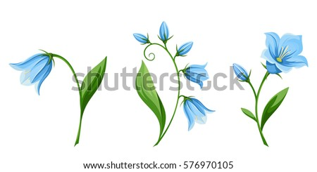 vector set of blue bluebell flowers isolated on a white background