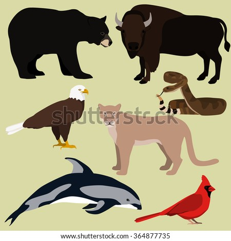 Vector set of cartoon north american animals. Bald eagle, red northern cardinal, cougar, bison, american black bear, rattlesnake, pacific dolphin. - stock vector