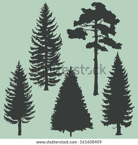 vector set of coniferous trees silhouettes   - stock vector
