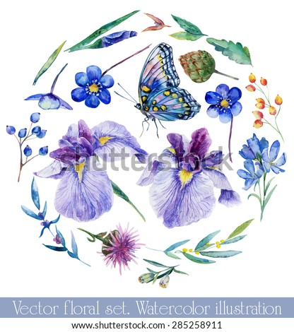 Vector set of different blue, lilac flowers for design. Watercolor irises, cornflower, wildflowers, leaves, berry, butterfly. Set of floral elements to create compositions.  - stock vector