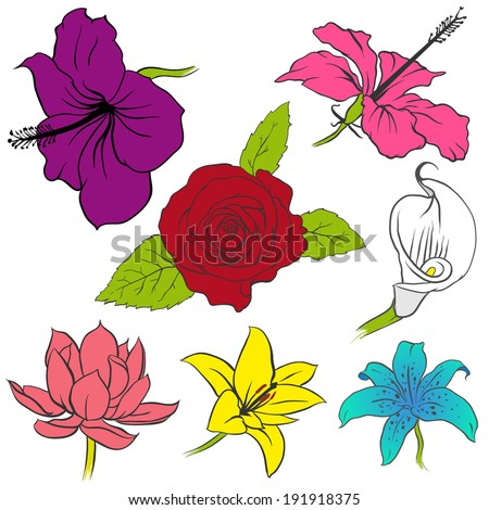 different flowers stock images, royaltyfree images  vectors, Natural flower