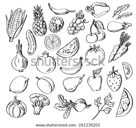 vector set of different hand drawn fruits and vegetables - stock vector