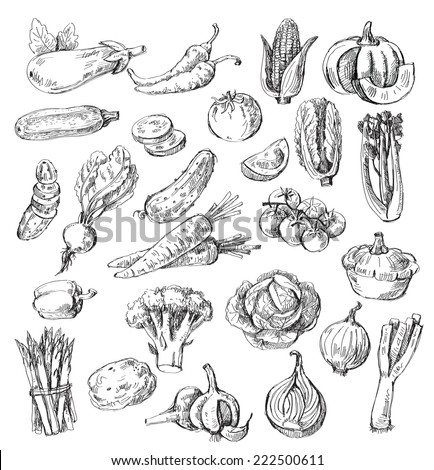 vector set of different hand drawn vegetable - stock vector