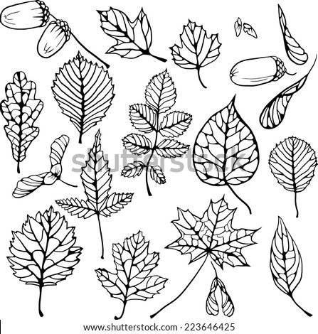vector set of doodle leaves and seeds, vector illustration - stock vector