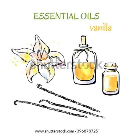 Vector set of doodle objects Aromatherapy Vanilla. Colorful hand drawn objects isolated on white background. Watercolor flower, pods and essential oils flasks and bottles with decorative rope. - stock vector
