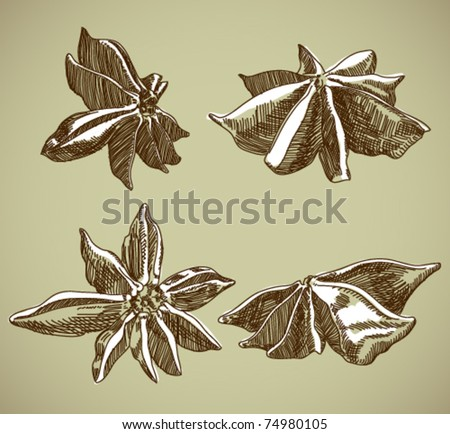 Vector set of drawing spices