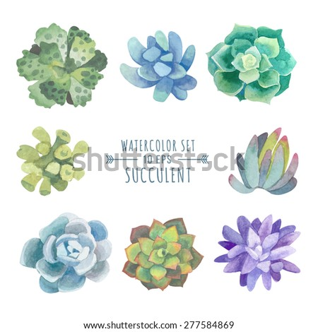 Vector set of floral elements in a watercolor style. Succulents painted in watercolor. Elements for design of invitations, movie posters, fabrics and other objects. Set #4 - stock vector