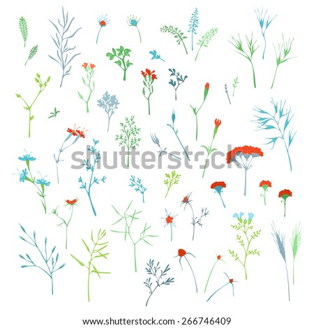 Vector set of grass elements isolated on white background. Various hand-drawn grass and floral elements for your design. - stock vector