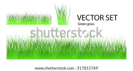 Vector set of grass icon. Green grass isolated over white background. - stock vector