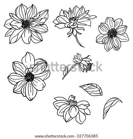 Vector Set Of Hand Drawn Dahlia And Leaves Isolated On White