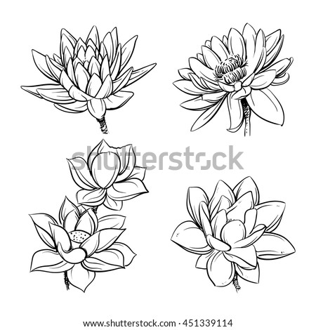 Vector set hand drawn lotus flowers stock vector 451339114 vector set of hand drawn lotus flowers sketch floral botany collection in graphic black and mightylinksfo
