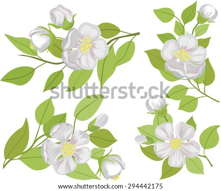 Vector set of illustrations of flowering branches of Apple.  - stock vector