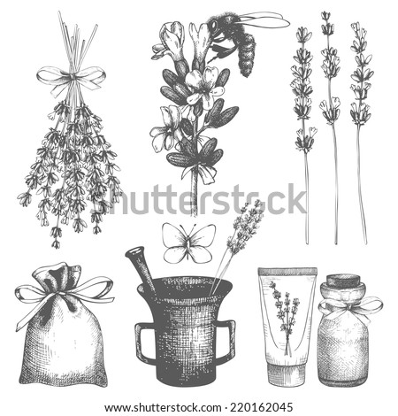 Vector set of ink hand drawn lavender illustration in lilac color. Vintage collection of graphic lavender flowers sketch  - stock vector