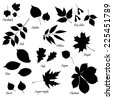 Vector set of leaves silhouettes with hand-written common names of trees and bushes on white background. Linden, ash, oak,maple, box elder, sugar maple, chestnut, birch, elm, willow, aspen, ninebark. - stock vector