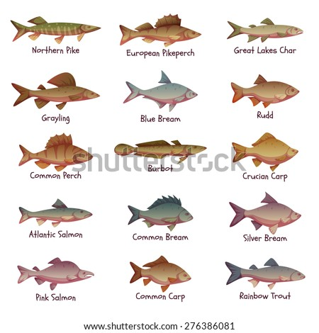 Vector set of most popular freshwater fishes. - stock vector