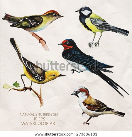 Vector set of naturalistic birds in watercolor style. Tit, Swift, sparrow and other birds. Watercolor sketch. - stock vector