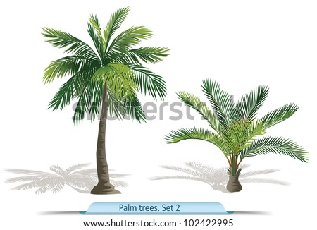 Vector set of palm trees. Part 2 - stock vector