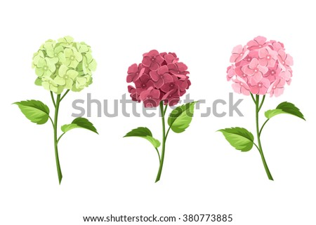 Vector set of pink, maroon and green hydrangea flowers with stems isolated on a white background.